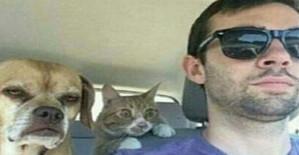 Kavgacı Kedinin İntikam Tayfası!